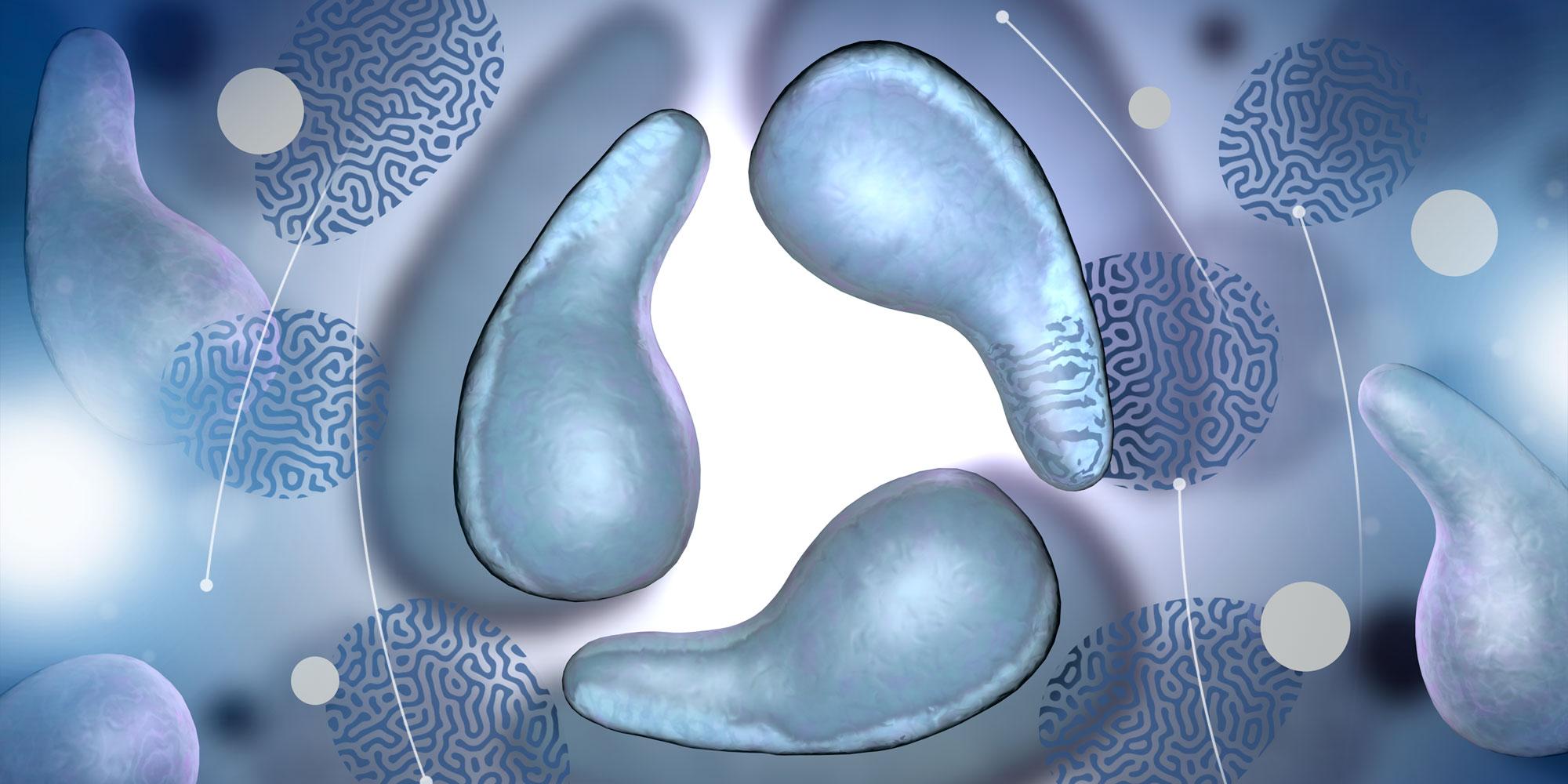 Μυκόπλασμα γεννητικών οργάνων